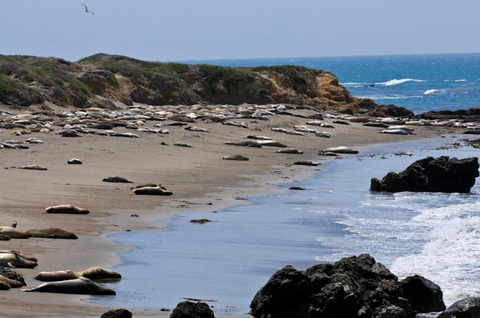 Elephant Seals on Beach