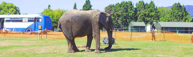 Elephant Trentham Memorial Park March 2006