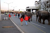The Ringling Brothers and Barnum Bailey Elephants walk from the DCU center to the P&W yard in Worcester after the last show.