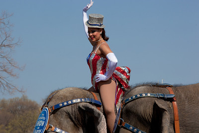Gleice DeSouza waves as she rides atop the lead elephant during the Ringling Bros. and Barnum & Bailey annual pachyderm parade. The famous elephants marched in front of the US Capitol to kick off their showing of BARNUM 200SM, a 200-year anniversary show. The event took place in Washington DC on March 22, 2011. (Photo by Jeff Malet)