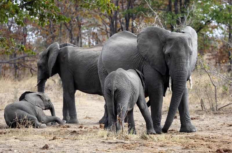 Shindzela Bush camp, Timbavati, Greater Kruger National Park, South Africa