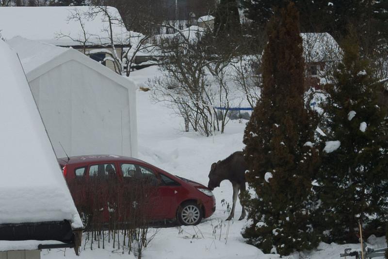 Den dagen du oppdager en klyse med frossent spytt på bilen din kan dette forklare hvordan det skjedde...
