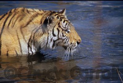 Elmira's Wildlife Sanctuary   - Tigers, Lions Birds