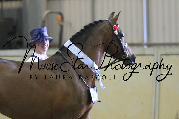 Victorian Arabian State Championships 2014 (2) - Laura Dascoli