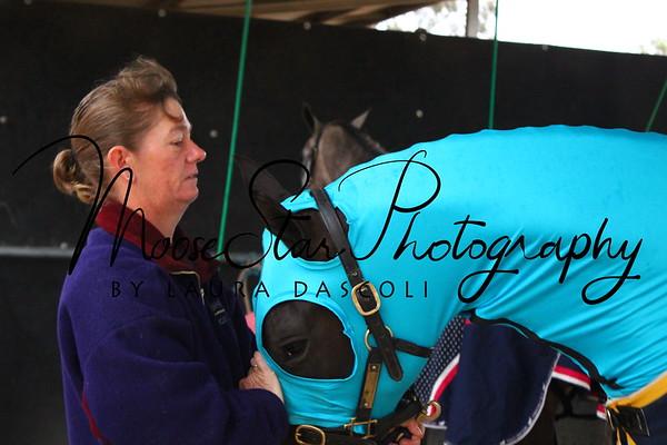 Victorian Arabian State Championships 2014 - Angelica Brooks