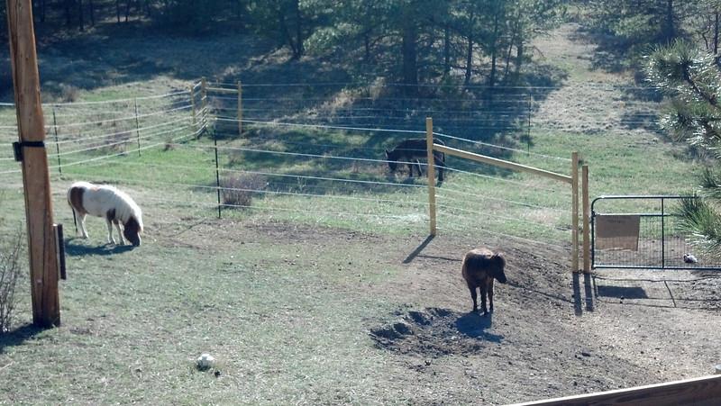 Legend, Luke, and Samwise enjoying the warm sun on a cool Evergreen CO mountain morning.