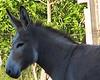 Donkey - 1