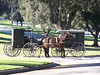 Amish Horse & Carriage at Rose Hills Memorial Park - filming