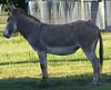 Donkey - 2