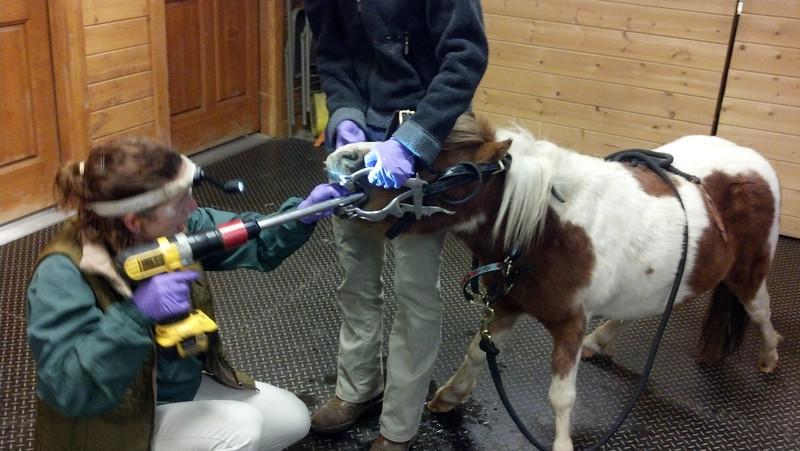 Dental work! Little horse, big tools!
