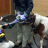 Dental work! Little horse, big tools!