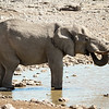 Elephant drinking at the Okaukeujo waterhole