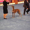 the Greyhound who won the Group