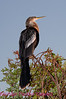 B19. Anhinga 2. No post-processing done to photo. Nikon NEF (RAW) files available. NPP Straight Photography at noPhotoShopping.com
