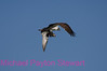 B94. Osprey with fish 2. No post-processing done to photo. Nikon NEF (RAW) files available. NPP Straight Photography.net