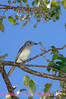 B148. Mockingbird 2. No post-processing done to photo. Nikon NEF (RAW) files available. NPP Straight Photography at noPhotoShopping.com