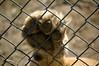 Exotic Feline Rescue Center April 21 2007