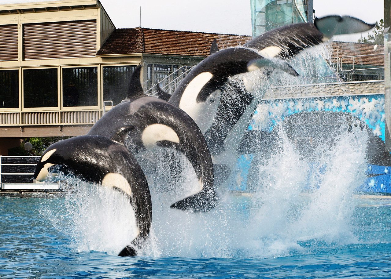 Jumping Orcas  Order Code: C8