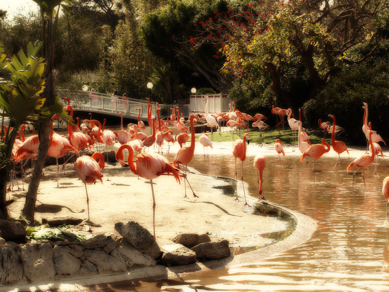 Flock of Flamingos  Order Code: B6