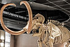 Columbian Mammoth. Arizona Natural History Museum.