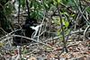 Resident Feral Kitty