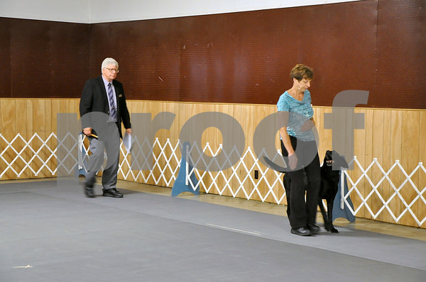 "-Messenger photo by Joe Sutter<br /> <br /> Nancy Dyer performs the ""heel"" command with Toby, a Labrador Retriever, in the obedience trials Saturday afternoon."