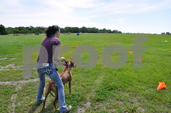 "-Messenger photo by Joe Sutter<br /> <br /> Carrie Meyer, of Omaha, holds back Sydney, a Rhodesian Ridgeback, before letting her chase the white plastic ""lures"" around the field during the coursing activity Saturday."