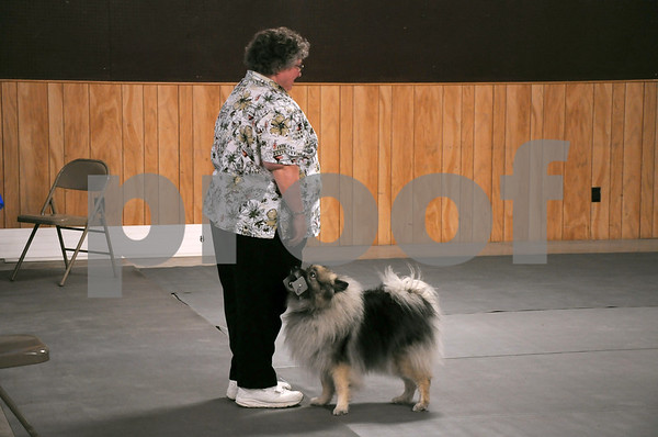 "-Messenger photo by Joe Sutter<br /> <br /> Marilyn Cornelius, of Des Moines, waits as her Keeshond Sophie brings the right metal toy from a pile in the ring during the Utility A obedience trials. Sophie had a little trouble with the ""stay"" command on Sunday, Cornelius said."