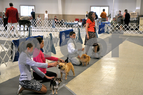 -Messenger photo by Joe Sutter<br /> <br /> Contestants keep their dogs in line during the Junior Showmanship Open Intermediate class, for ages 10-18.