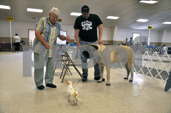 -Messenger photo by Joe Sutter<br /> <br /> Joyce Standish of Dixon, Neb., and her Chihuahua Taylor Swift, meet Mike Stewart of St. Joseph, Minn., and his Bull Mastiff Lucky. Lucky is 20 months old and 220 pounds; when he's full grown Stewart said he'll be 285 pounds.