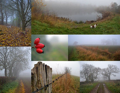 FOGGY NOVEMBER DOG WALK