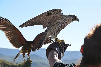 _DSC0056_Both_birds_flapping_wings