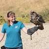 Wally, Eurasian Eagle Owl.