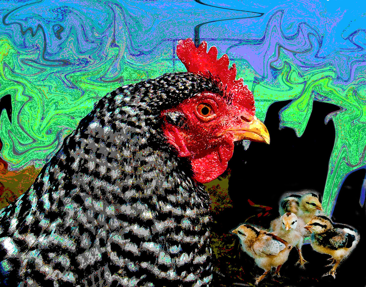 Hen and Chicks   #1453