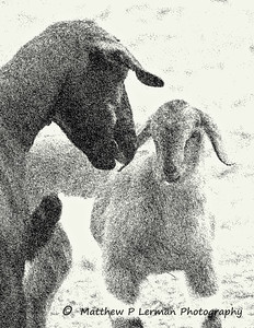 Mother Goat and Kid  #212-5