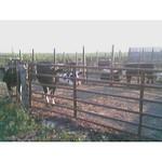Farm Livestock