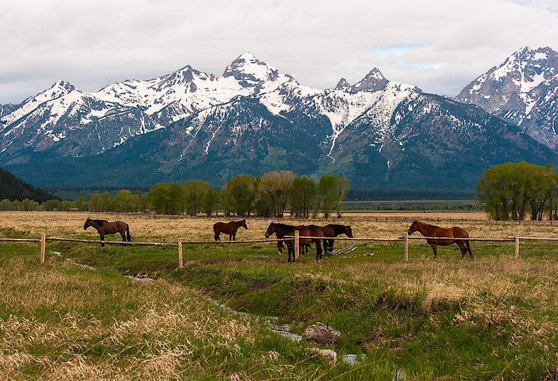 Horses at Moulton Barn, Mormon Row, Grand Teton National Park, Jackson, WY