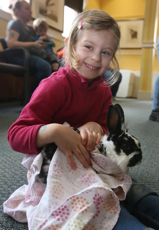. Farm Visits brings their travelling petting zoo of baby farm animals to Pollard Memorial Library. Chloe Vispoel, 4, of Dracut, holds a bunny called Elizabeth Taylor because she has purple eyes. (SUN Julia Malakie)