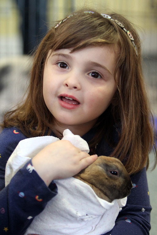 . Farm Visits brings their travelling petting zoo of baby farm animals to Pollard Memorial Library. Peyton Matte, 4, of Lowell, cuddles a bunny. (SUN Julia Malakie)
