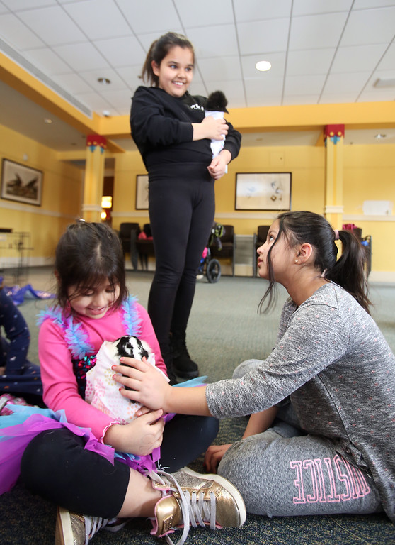 . Farm Visits brings their travelling petting zoo of baby farm animals to Pollard Memorial Library. Inshirah Khan, 5, left, and her sister Uswah Kahn, 8, of Lowell, pet a bunny while their cousin Venisha Jhanjee, 11, of Norwood, holds a Japanese Silkie chicken. (SUN Julia Malakie)