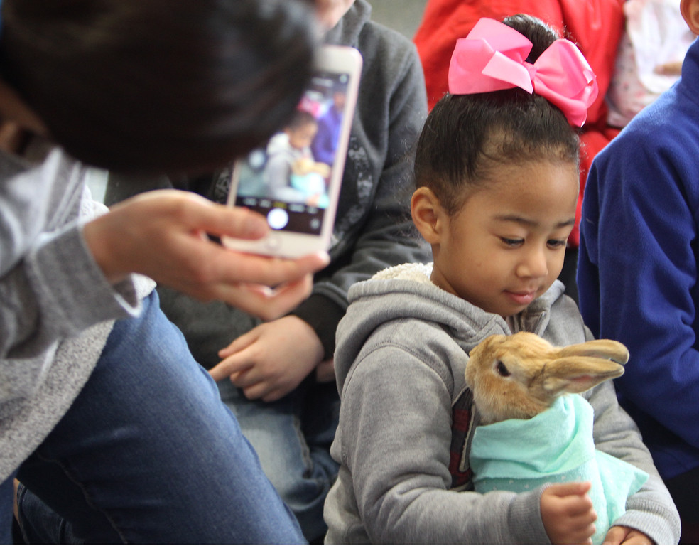. Farm Visits brings their travelling petting zoo of baby farm animals to Pollard Memorial Library. Young Joo Eweka of Lowell takes a picture of her daughter Winslet Eweka, 3, holding baby rabbit. (SUN Julia Malakie)