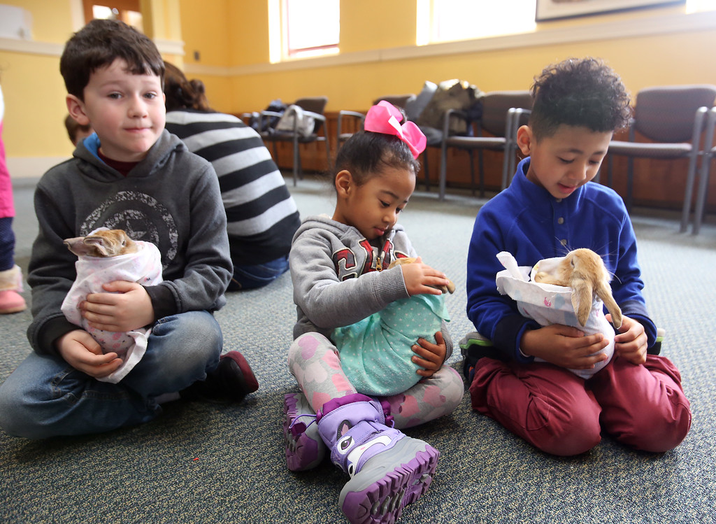 . Farm Visits brings their travelling petting zoo of baby farm animals to Pollard Memorial Library. From left, Jackson Durkin, 6, Winslet Eweka, 3, and her brother Winston Eweka, 5, all of Lowell, cuddle bunnies. (SUN Julia Malakie)