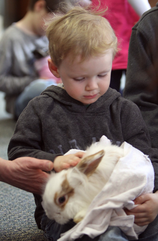 . Farm Visits brings their travelling petting zoo of baby farm animals to Pollard Memorial Library. Theodore Durkin, 3, of Lowell, holds a Lionhead mix bunny. (SUN Julia Malakie)