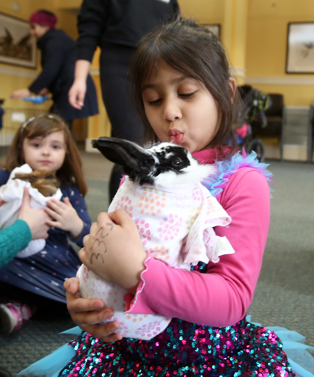 . Farm Visits brings their travelling petting zoo of baby farm animals to Pollard Memorial Library. Inshirah Khan, 5, of Lowell, cuddles a baby rabbit. At left is Peyton Matte, 4, of Lowell. (SUN Julia Malakie)