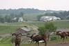 Farm at Walnut Creek19