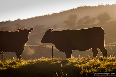 Early morning scene in the Murray Valley area near Tallangatta
