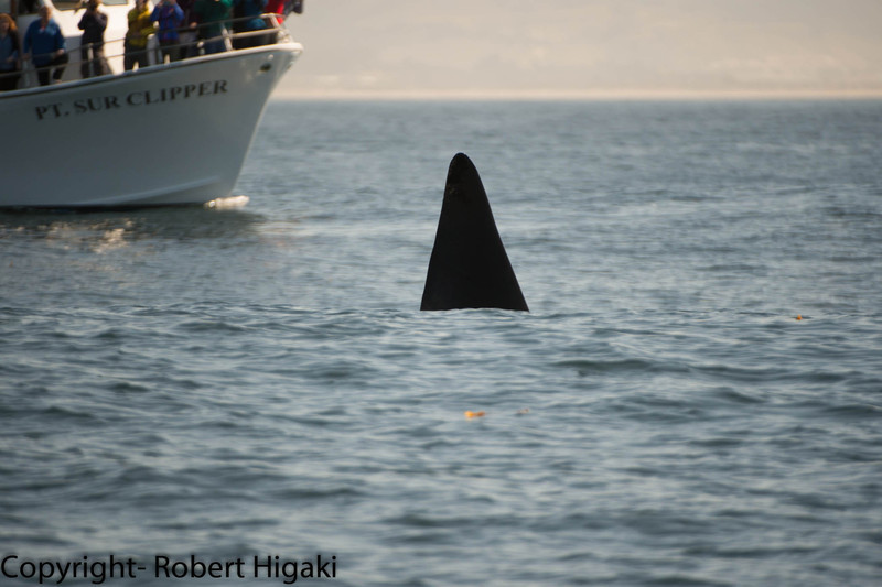 Nope- not photo-shopped: it is Fat Fin