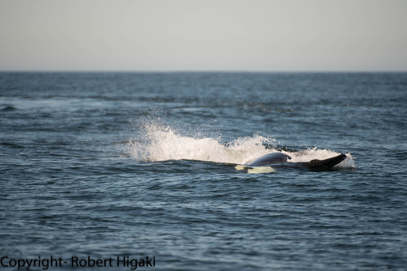 Now, you can see this dorsal fin