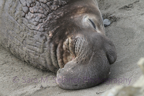 Nose Napping