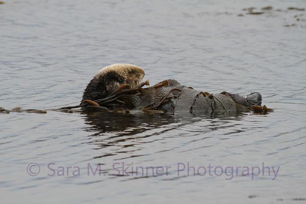 Otter Wrap